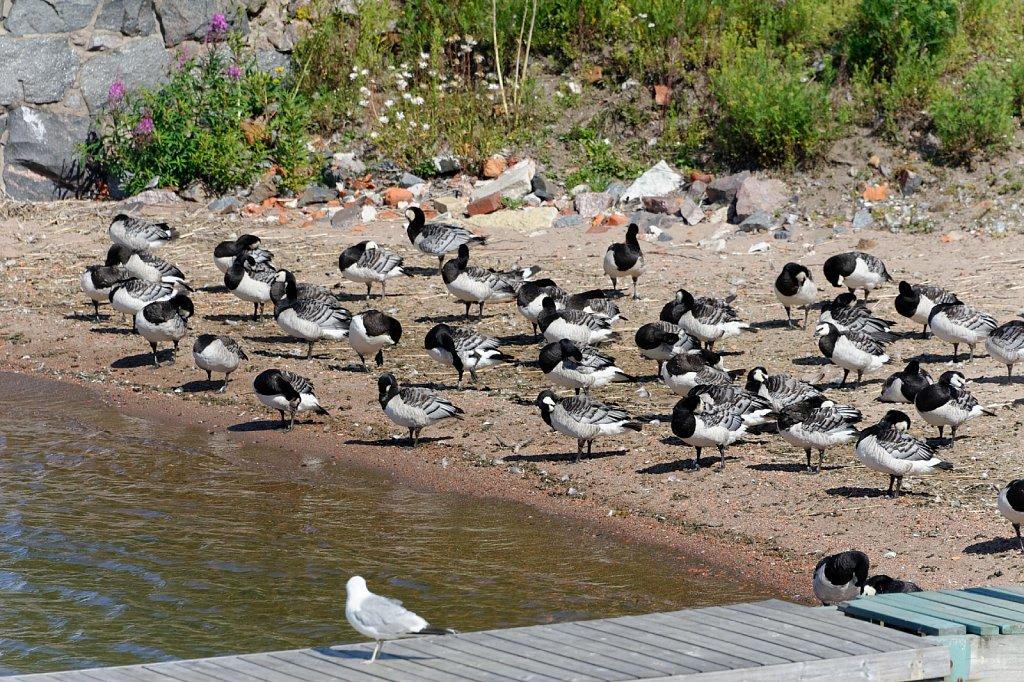 Mehr Vögel