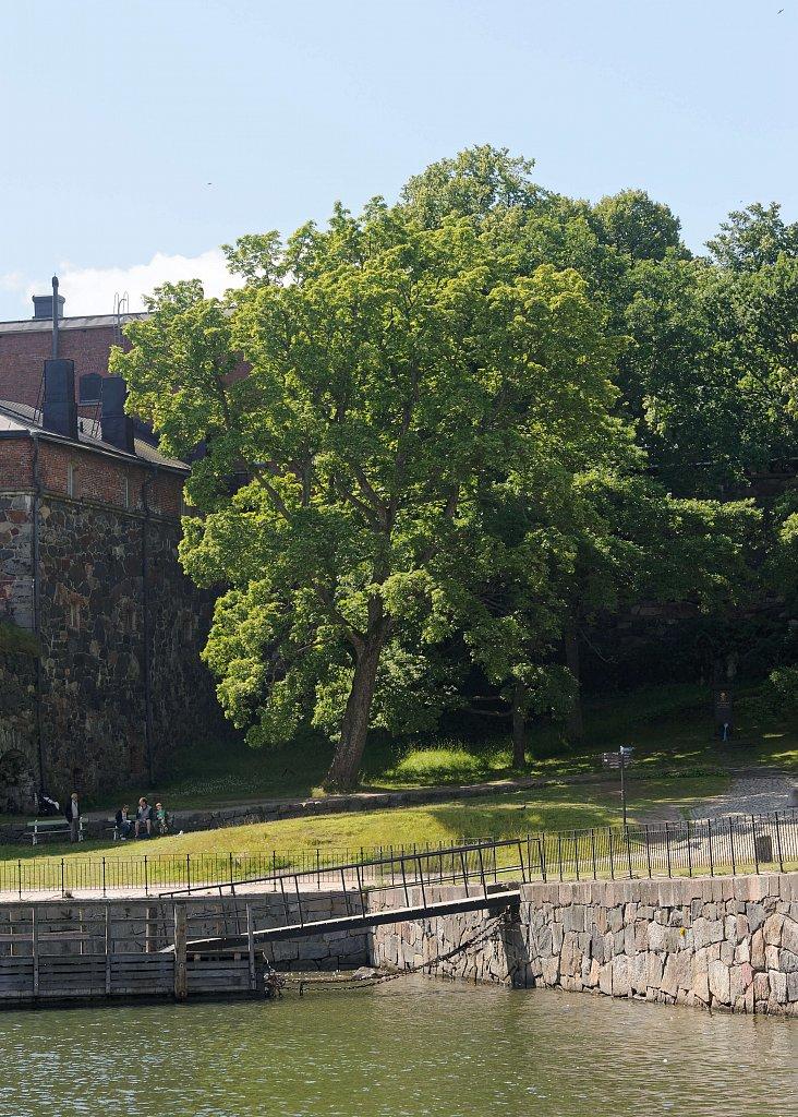 Baum und Festung